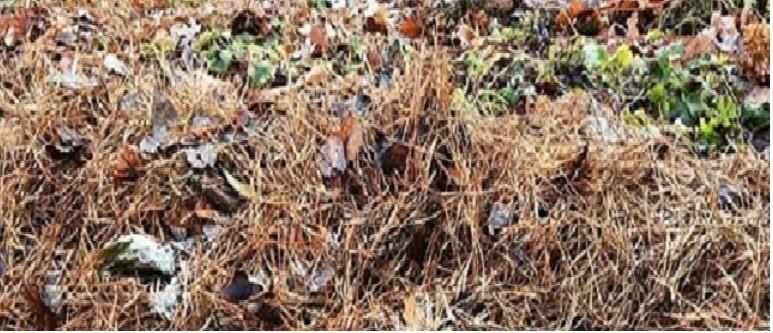 компост листья